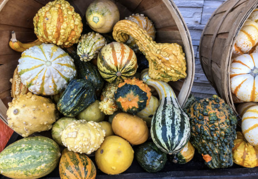 It's Decorative Gourd Season, Motherfuckers